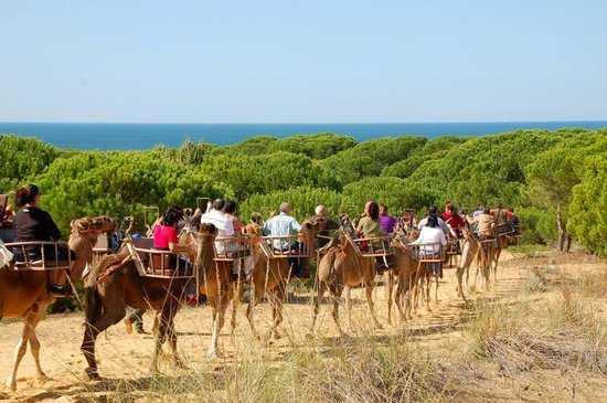 Rutas en Camello Doñana