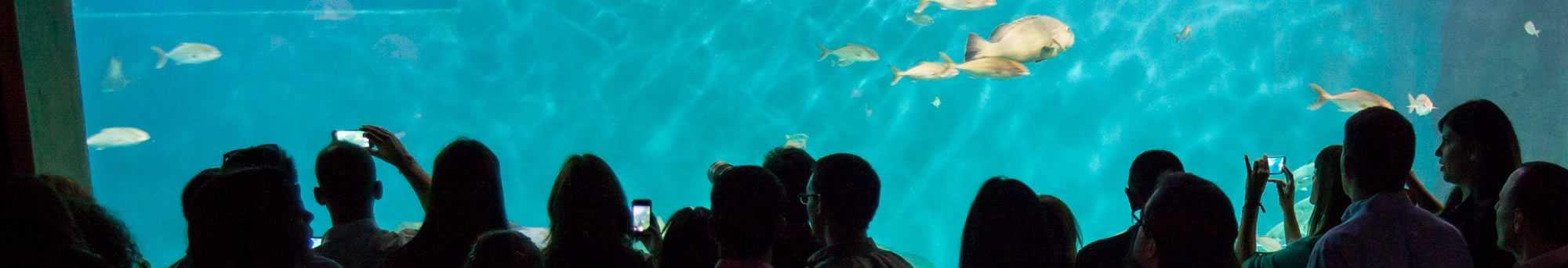 Aquarium de Séville
